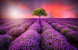 与淡紫色领域的惊人的风景在日落 免版税库存图片