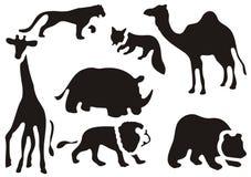 动物设置了通配 库存图片