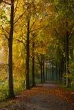 Ανατολή στη λεωφόρο πάρκων Στοκ εικόνες με δικαίωμα ελεύθερης χρήσης