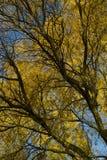 Κορυφή του φθινοπώρου δέντρων Στοκ Φωτογραφία