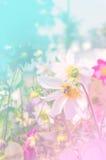Красочные цветочный сад и пчела и романский цвет Стоковое Изображение