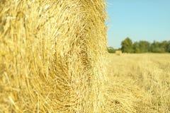 堆干草在领域的秸杆大包在收获以后 免版税库存图片
