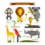 在平的样式设计的热带动物传染媒介集合 密林鸟、哺乳动物和掠食性动物 动物园动画片象汇集 图库摄影