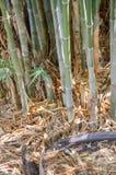 竹绿色结构树 库存图片