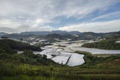 美好的风景,在温和的日落光,生长葡萄园的葡萄谷 免版税库存图片
