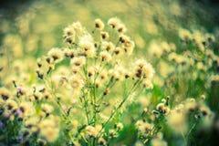 野生干燥植物 库存照片