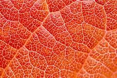 Текстура листьев Стоковое Фото
