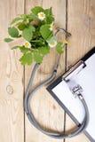 Свежая трава и медицинский стетоскоп на деревянном столе Принципиальная схема альтернативной микстуры Стоковое Изображение