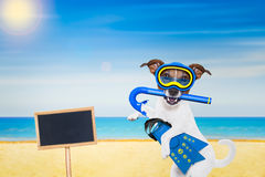 佩戴水肺的潜水狗 库存照片