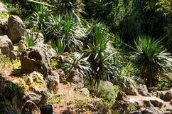 Вихоры и камни травы Стоковое Изображение RF