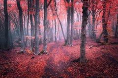 雾的美丽的不可思议的红色森林在秋天 童话风景 免版税库存照片