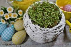 新鲜的水芹和兔子和复活节彩蛋 免版税图库摄影