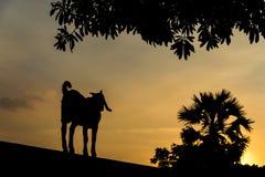 Коза стоя на стене смотря вне к снаружи Стоковое Изображение