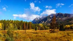 秋天颜色在落矶山在班夫国家公园 图库摄影