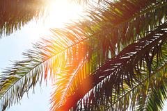 Υπόβαθρο φύσης, δέντρα φύλλων φοινικών ενάντια στην ταπετσαρία μπλε ουρανού, καλοκαιρινές διακοπές Θάλασσα, καλοκαίρι, διακοπές,  Στοκ φωτογραφία με δικαίωμα ελεύθερης χρήσης