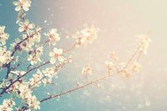 春天白色樱花树的抽象梦想和被弄脏的图象 选择聚焦 被过滤的葡萄酒 免版税库存照片