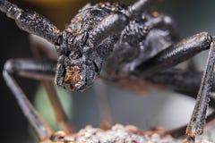 与大眼睛的蜘蛛 库存照片