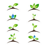 绿色新芽象或商标设计集合 图库摄影