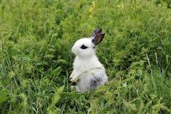 站立在草的复活节兔子 免版税库存照片