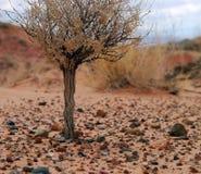 沙漠灌木 库存照片