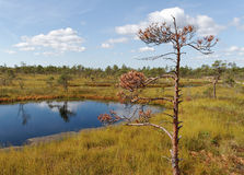 对沼泽的看法 免版税库存图片