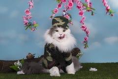 作为军事卫兵和平穿戴的猫在森林 免版税库存图片