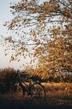 自行车在庭院里 在绿草的老自行车 骑自行车浅骑自行车的骑自行车者深度域重点森林现有量山的透视图 库存图片