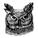 μακρύς-έχουσα νώτα κουκουβάγια με τη ζωηρόχρωμη απεικόνισηη σκίτσων φτερών Στοκ Εικόνες