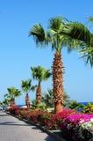 棕榈树、美丽的花和人行道在热带庭院里 库存图片