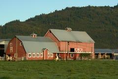 种田红色的谷仓农场 库存图片