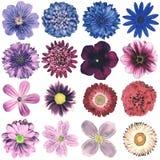 Различное винтажное ретро собрание цветков изолированное на белизне Стоковое Изображение RF
