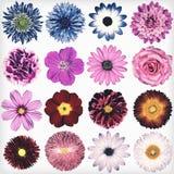 Различное винтажное ретро собрание цветков изолированное на белизне Стоковые Изображения RF