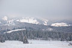 积雪的喀尔巴阡山脉有雾的冬天早晨 乌克兰 免版税图库摄影