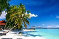 在白色沙子海滩的棕榈在热带手段天堂马尔代夫海岛上 库存照片