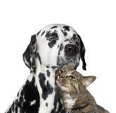 在猫和狗之间的接近的友谊 免版税库存照片