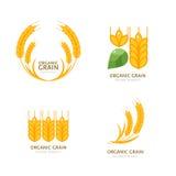 有机产品的,收获和种田概念,五谷,面包店 免版税库存照片