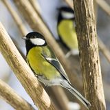 鸟 免版税库存图片