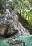 牙买加 小的瀑布在密林 免版税库存图片