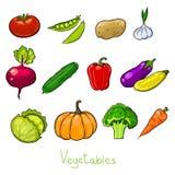 эскизы овощей цвета Стоковое фото RF