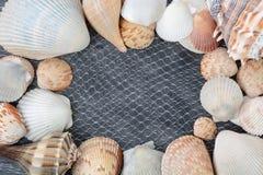 与壳的背景 免版税库存图片
