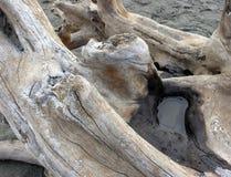 漂流木头水坑 图库摄影