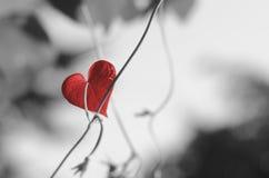 红色心形的叶子 库存图片