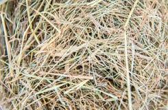 Предпосылка сена Стоковое Изображение