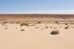 Пустыня Сахары в Западной Сахаре Стоковое Изображение RF