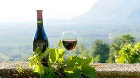 装瓶和一杯红葡萄酒,在葡萄园背景 免版税库存照片