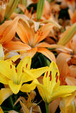 цветет время весны Стоковое фото RF