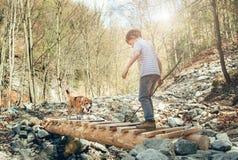 Λίγο ταξιδιωτικό την άνοιξη δάσος με το σκυλί του Στοκ εικόνες με δικαίωμα ελεύθερης χρήσης