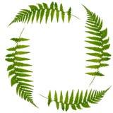 символ листьев папоротника Стоковые Фотографии RF