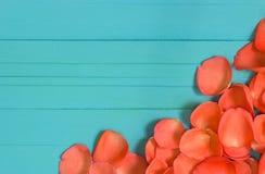 关闭在蓝色木头,选择聚焦的新鲜的玫瑰花瓣 免版税库存照片