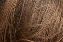 Φυσική τρίχα κάστανων Στοκ Φωτογραφίες